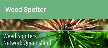 Queensland Government Launches New Weed Spotter App