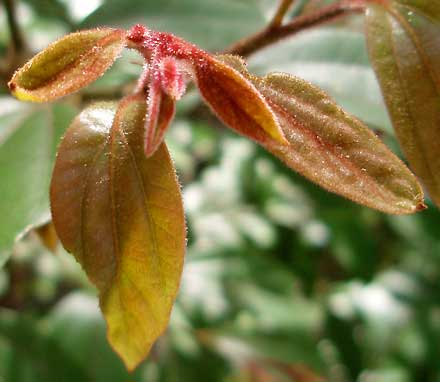 Nursery Manager's Plant of the Month
