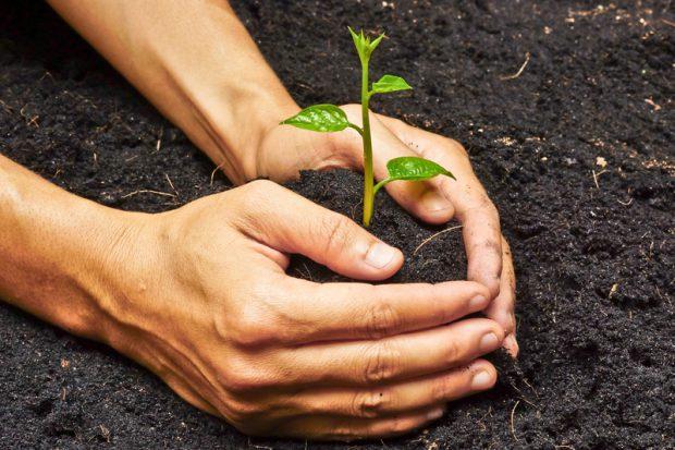 The Catchment Community Tree Plant