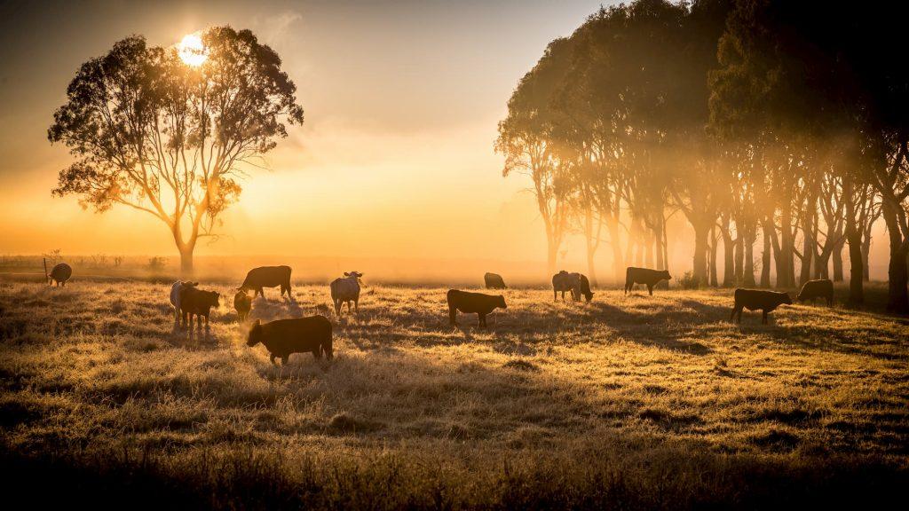 Australian Farm Biodiversity Certification Scheme Trial